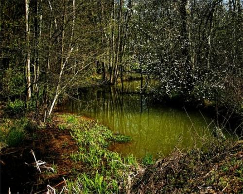 "Andrew Yates, ""Green Pool Darwell Woods"", 2008, archival inkjet print"