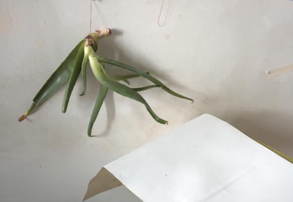 """""""Aloe"""", 2013, archival inkjet print, size variable"""