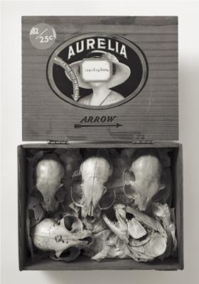 """""""Aurelia"""", 1993, selenium-toned silver gelatin print, 24 x 20"""""""