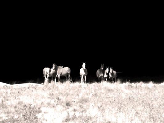 "Carolyn Krieg, ""Mares on a Hill"", 2015, archival inkjet print, 17.5 x 23.25"""