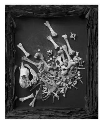 """Cartwheel 5"", 1995, selenium-toned gelatin silver print, 46.75 x 37.25"""
