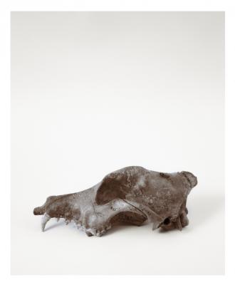 """Dog Skull"", 1993, selenium-toned silver gelatin print, 20 x 16"""