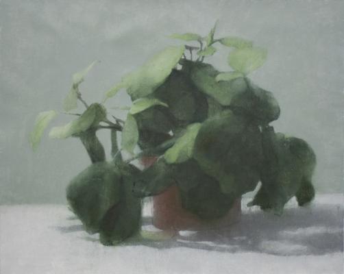 "Eric Elliott, ""Prayer Plant"", 2015, oil on canvas, 16 x 20"""