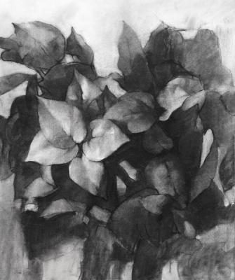 "Eric Elliott, ""Philodendron"", 2015, charcoal on paper, 24 x 18"""