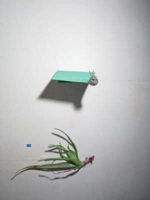 """""""Pairing"""", 2014, archival ink jet print, 25 x 20"""" framed"""