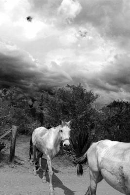 """Carolyn Krieg, """"Horse Tie"""", 2015, archival inkjet print, 34.25 x 21.75"""""""