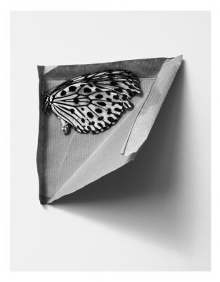 """India Tiger 5"", 1995, selenium-toned silver gelatin print, 21.5 x 17.5"""