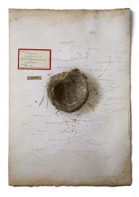"Dianne Kornberg, ""Courtship"", 2009, archival pigment print, 24"" x 17"""