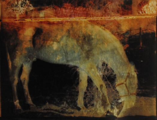 "Carolyn Kreig, ""Burning House Stallion #1"""