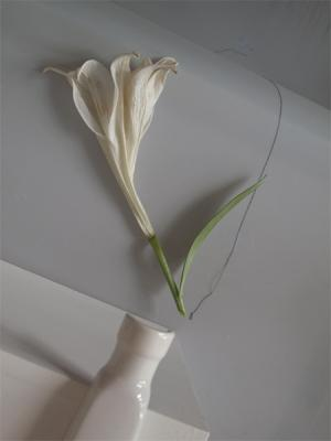 """Lily"", 2013, archival inkjet print, size variable"