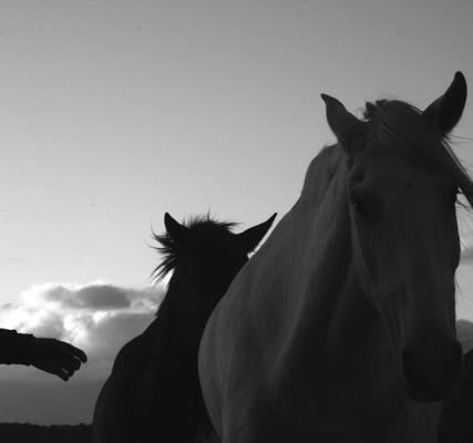 """Carolyn Krieg, """"Person Horse, Sea"""", 2014, archival inkjet print"""