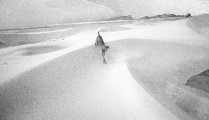 """Rey Dune"", 2014, archival inkjet print"