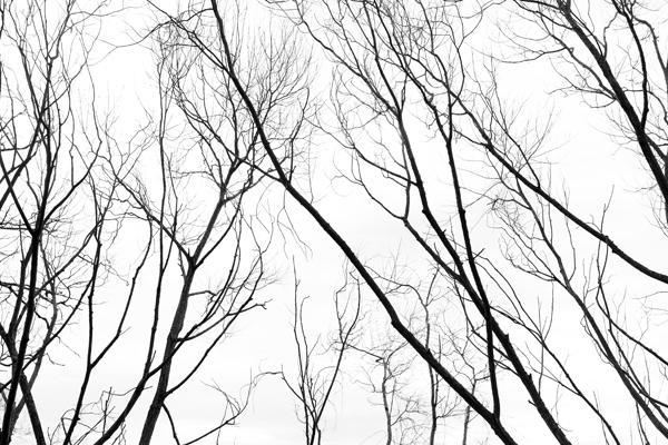 """""""Branching"""", 2016, inkjet print 6 x 9"""""""