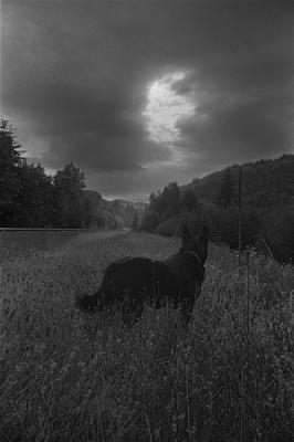 "Glenn Rudolph, ""Tippy, Lester"", 2005, archival inkjet print, 31.5 x 20.75"" image, 36.5 x 24"" pape"