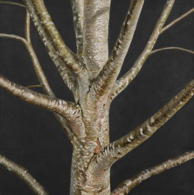 "Evelyn Woods, ""Tree #3"", 2013, oil on canvas, 24 x 24"""