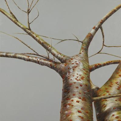 "Evelyn Woods, ""Tree # 7"", 2013, oil on canvas, 24 x 24"""