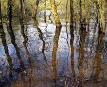 "Andrew Yates, ""Green Pool Darwell Woods"", 2008, archival inkjet print"