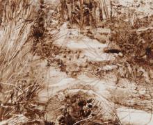 """""""Undisturbed"""", 2017, walnut ink on paper, 7.25 x 5.25"""""""